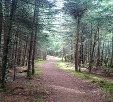 Wetlands Trail